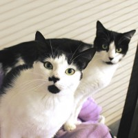 Cats Protection Canterbury - Solly and Molly SOLLY ADOPTED