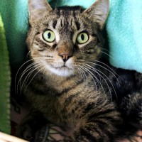 Cats Protection Canterbury - Sparky ADOPTED