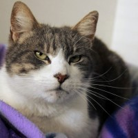 Cats Protection Canterbury - Spencer ADOPTED