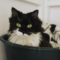 Cats Protection Canterbury - Stella ADOPTED