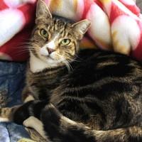 Cats Protection Canterbury - Tallis ADOPTED