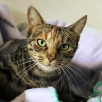 Cats Protection Canterbury - Tia ADOPTED