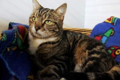 Cats Protection Canterbury - Tigger ADOPTED