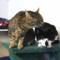 Cats Protection Canterbury - Tigger and Keith ADOPTED