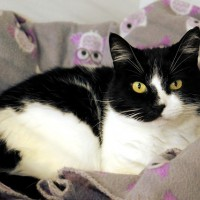 Cats Protection Canterbury - Toulouse ADOPTED
