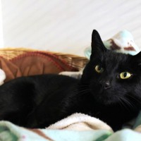 Cats Protection Canterbury - Turbo ADOPTED