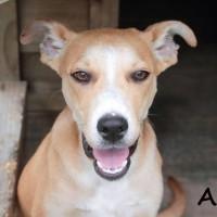 NOW ADOPTED!!SPCA Kawerau a eager 'Asha'