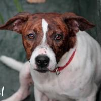 NOW ADOPTED!!SPCA Kawerau a eager 'Axel'