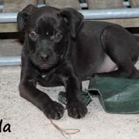 NOW ADOPTED!!SPCA Kawerau popular 'Bella'