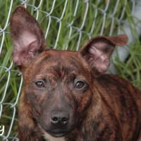 NOW ADOPTED!!SPCA Kawerau delightful 'Betty'