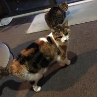 2 older but still fun cats needing new home