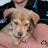 NOW ADOPTED!!SPCA Kawerau bonnie 'Clyde'