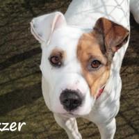 NOW ADOPTED!!SPCA Kawerau eager 'Gazzer'