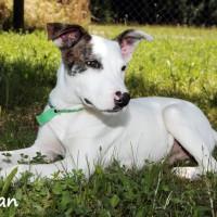 NOW ADOPTED!!SPCA Kawerau shy 'Keiran'