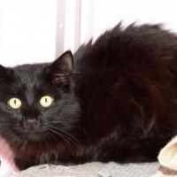 NOW ADOPTED!!SPCA Kawerau Kitty 'Kitty'