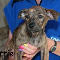 NOW ADOPTED!!SPCA Kawerau happy 'Lottie'