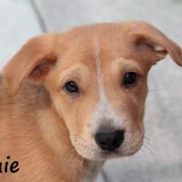 NOW ADOPTED!!SPCA Kawerau confident 'Louie'