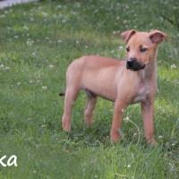 NOW ADOPTED!!SPCA Kawerau little 'Luka'