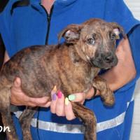 NOW ADOPTED!!SPCA Kawerau delightful 'Lytton'