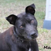 NOW ADOPTED!!SPCA Kawerau gentle 'Mackie'