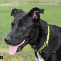 NOW ADOPTED!!SPCA Kawerau happy 'Mitzi'