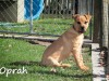 NOW ADOPTED!!SPCA Kawerau happy 'Oprah' - oprah14_2b900ab515c1ca4be2ccf6c186a52d44