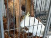 Cockatoo (male) needs loving home - p11-chicos-nest-attempt_b2a397482d97b63b57f4f23ab561d690