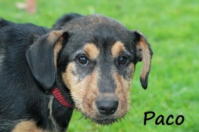 NOW ADOPTED!! SPCA Kawerau playful 'Paco'