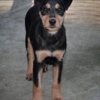 NOW ADOPTED!! SPCA Kawerau noble 'Patsy'