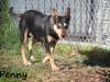 NOW ADOPTED!!SPCA Kawerau special 'Penny' - penny_b31c0ca3ed3d43bd0808124fbbd57a68
