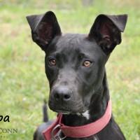 NOW ADOPTED!!SPCA Kawerau special 'Pippa'