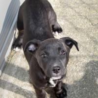 NOW ADOPTED!! SPCA Kawerau confident 'Sage'