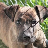 NOW ADOPTED!!SPCA Kawerau wise 'Seth'