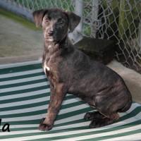 NOW HOMED!! SPCA Kawerau lady 'Tala'