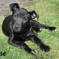 NOW ADOPTED!!SPCA Kawerau beautiful 'Talise'