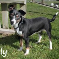 NOW ADOPTED!! SPCA Kawerau foxy 'Tilly'