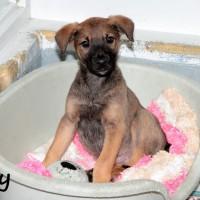 NOW ADOPTED!! SPCA Kawerau terrific 'Troy'