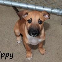 NOW ADOPTED!!SPCA Kawerau little 'Whippy'