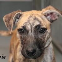 NOW ADOPTED SPCA Kawerau contented 'Winnie'