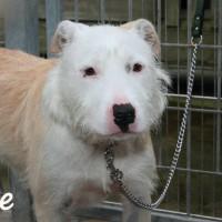 NOW ADOPTED!!SPCA Kawerau delightful 'Zoe'